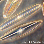 image diatom-63-75-vista-focus-png